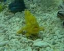 frog-fish.jpg