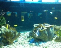 giant-clam.jpg