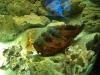 stone-fish.jpg